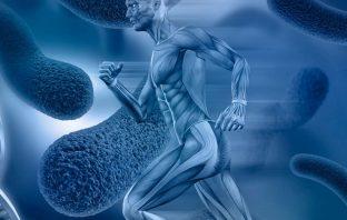 corredor metabolismo